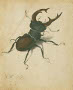 Art-Pic-Stag-Beetle-A-Durer